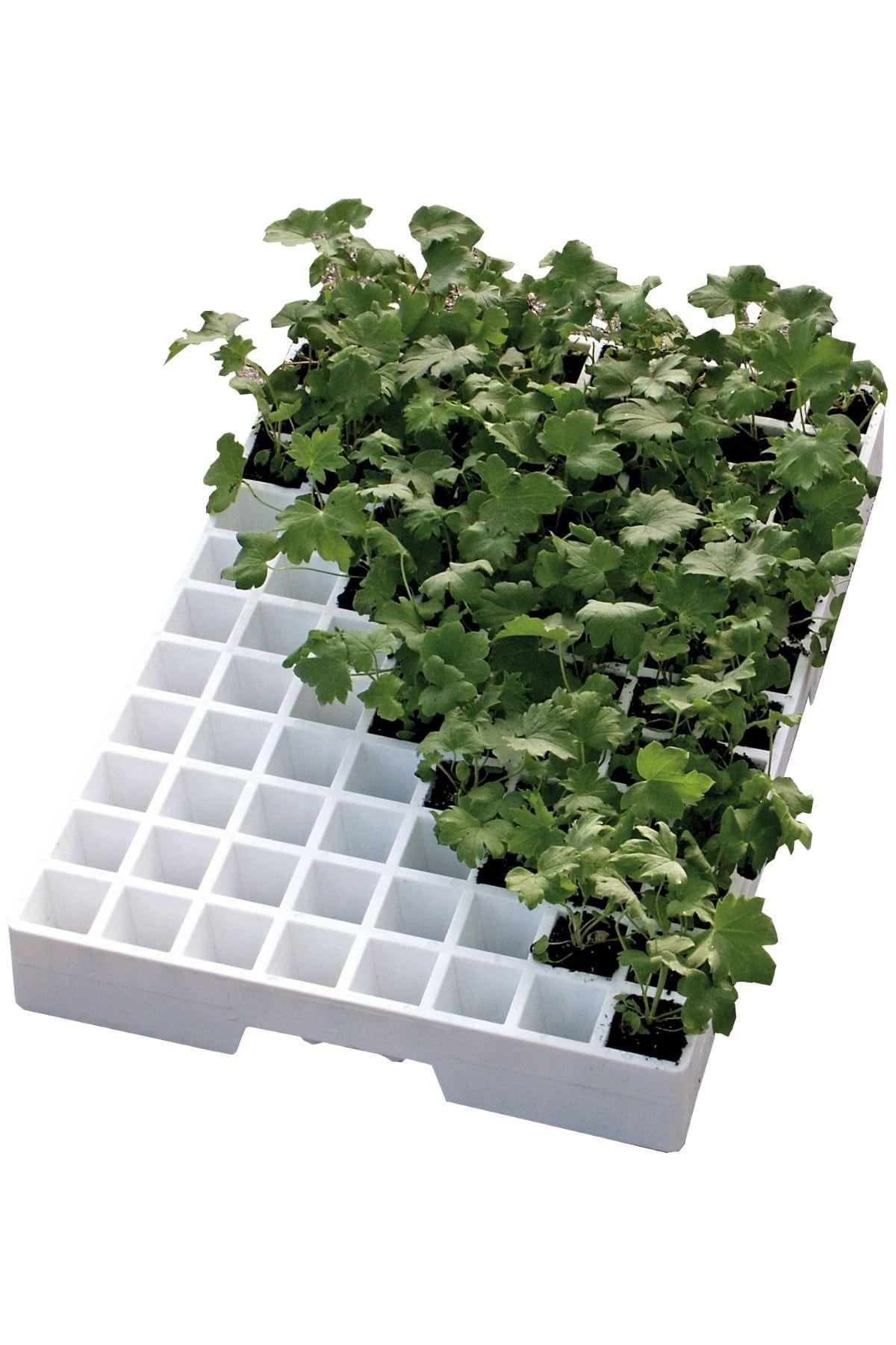 EPS Seeding Trays Image